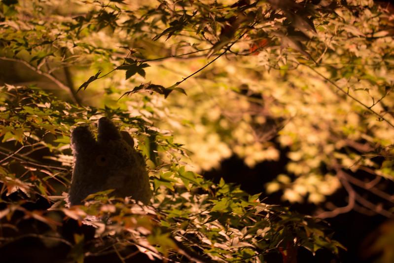 20141122-武奈ヶ岳&京都ライトアップ-0836.jpg