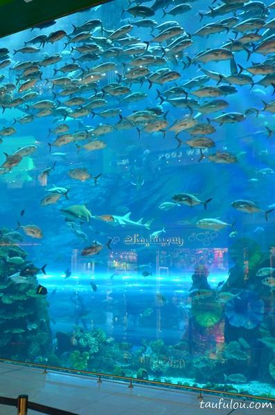 Dubai Aquarium (1)