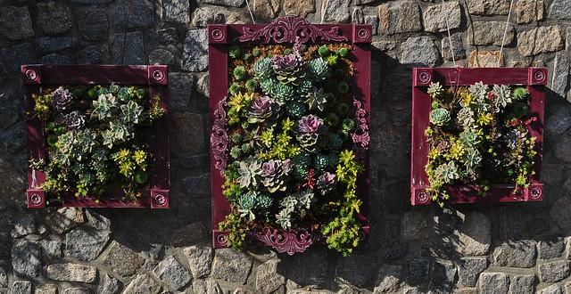 Succulent Picture Frames (1)