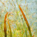 River Reeds by Terry Pellmar