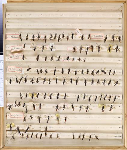 C.G. Thomson Hymenoptera 3