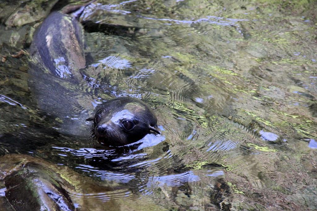 swim with seals travel bucketlist