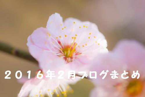 梅の花 by ぱくたそ