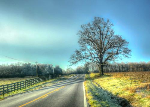 tree rural photoshop landscape us nikon unitedstates northcarolina hdr lonetree lawndale photomatixpro adobelightroom clevelandcountync