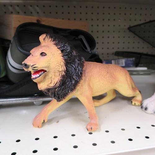 wtf lion side