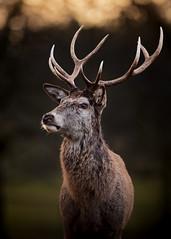 Wollaton Hall and Deer Park