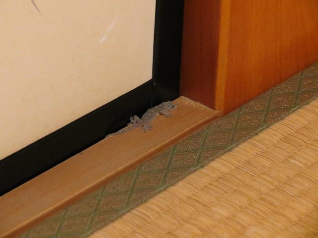 Yamori (gekko house guardian)