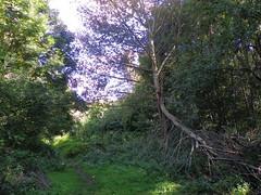 GOC Walthamstow to Stratford 124: Wick Wood, Hackney