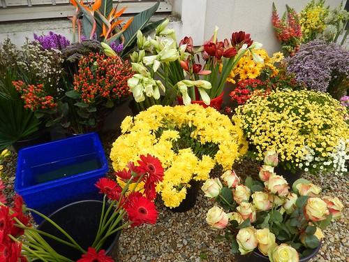 Les fleurs à Niort