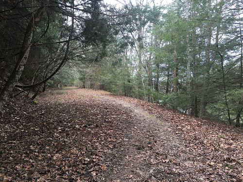 Go up this path to stay on the Sheltowee!