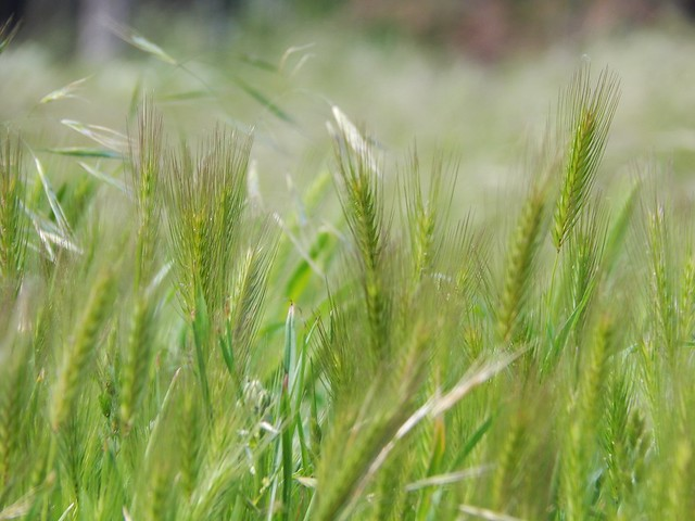 зелёная, новая, весенняя трава   Хорошо.Громко.