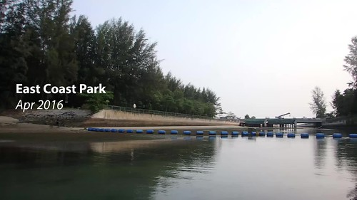 Seagrasses at East Coast Park