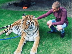 Justin Bieber: He is smart with a tiger, an animal rights organization the knock out!