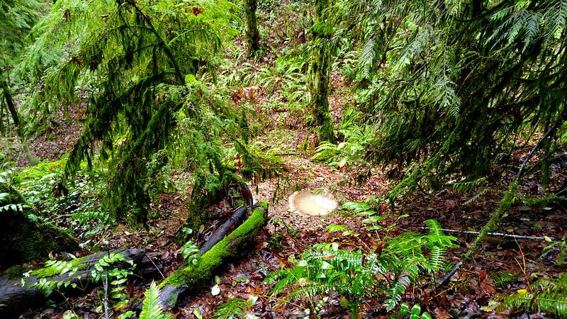 ForestPark5