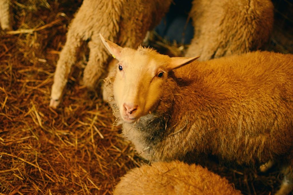 lammas18