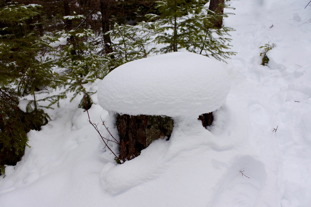 Snow capped stump