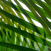 Green Palm Leaf Patterns by yago1.com