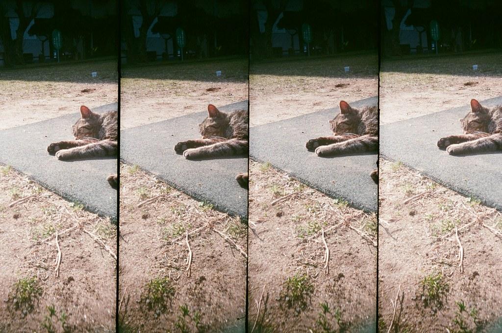 銚子市 千葉縣 / AGFA VISTAPlus / SuperSampler 2016/02/05 用我的視角看你們,我離開的時候真的好想念你們喔,你們好黏好可愛喔!  那時候去到銚子市,一個很少人會去的小鎮,那天天氣變好,好多貓貓跑出來曬太陽,這兩隻很黏,一直給我騷肚子!  現在有點想念牠們了!  SuperSampler Dalek AGFA VISTAPlus ISO400 8266-0035 Photo by Toomore