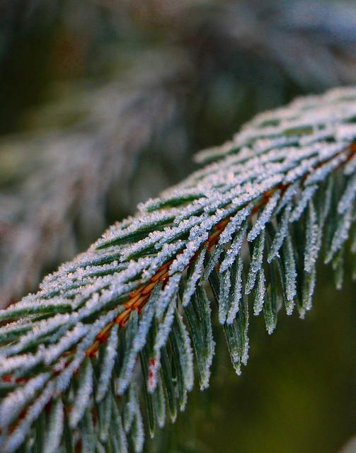 Frozen garden