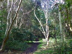GOC Walthamstow to Stratford 126: Wick Wood, Hackney