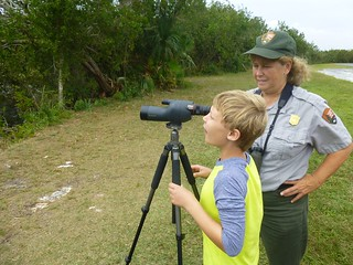 Spotting spoonbills