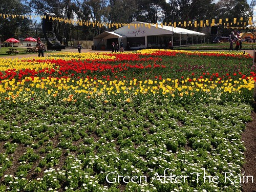 150917c Canberra Floriade _24 _TH