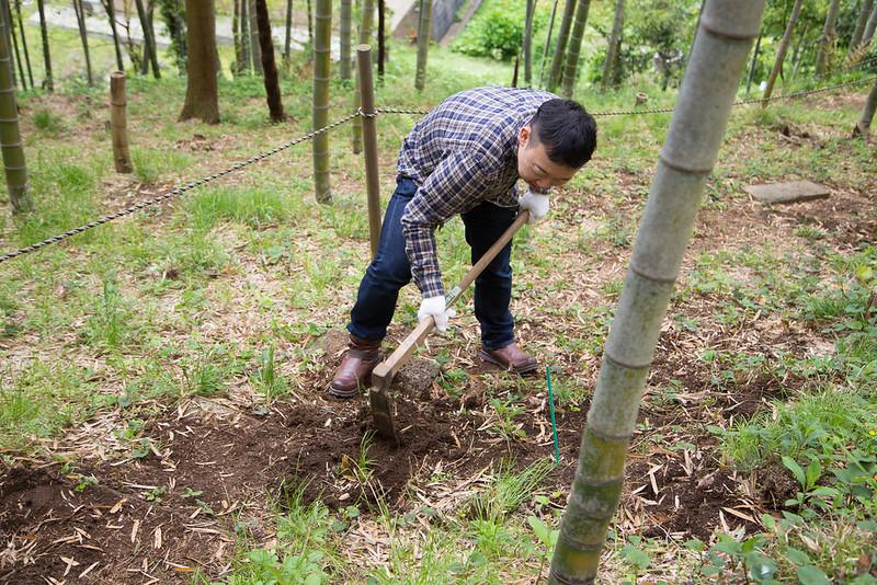 タケノコ掘り-13