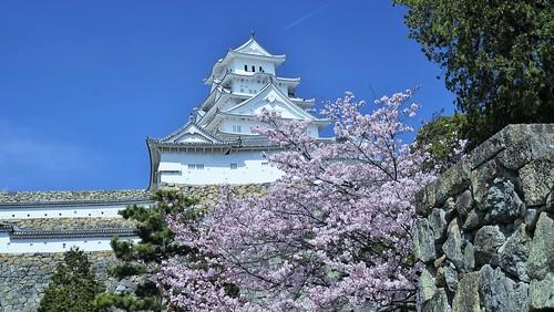trees castle japan spring view hill spot 日本 himeji cherryblossoms 石垣 2016 兵庫県 姫路城 世界遺産 天守閣