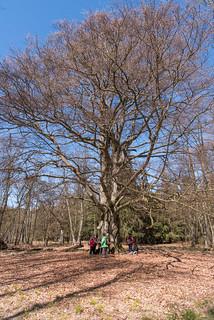 Rangergruppe an Holgerbuche im Darßwald