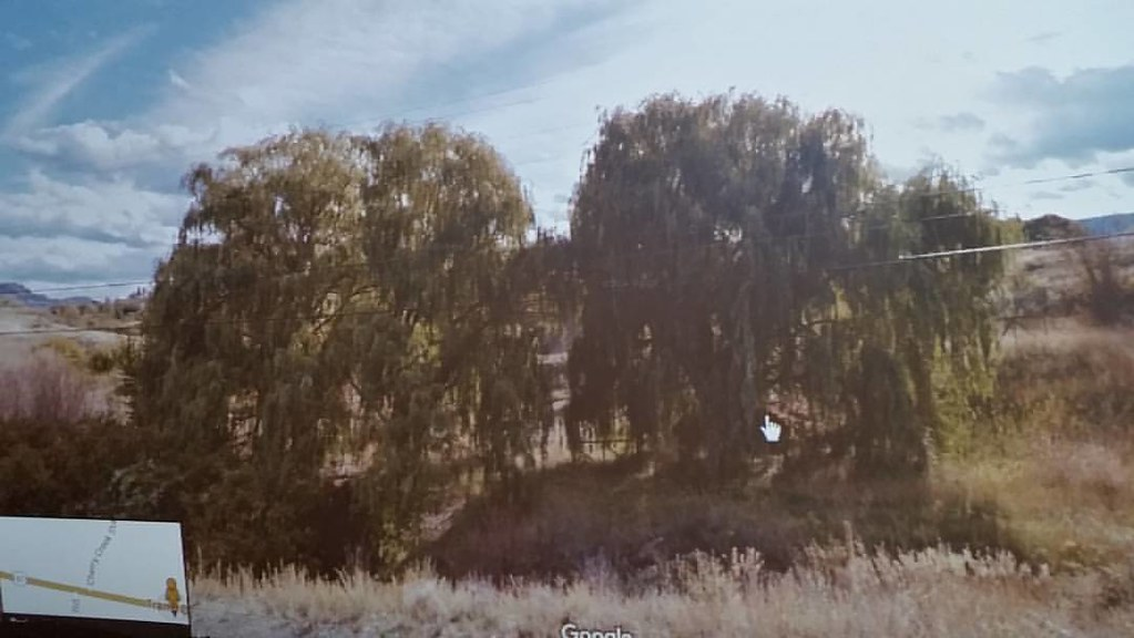 Weeping willows #ridingthroughwalls