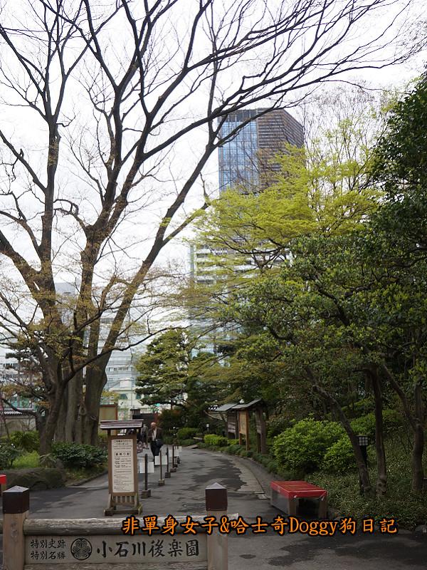 日本自由行小石川後樂園&東京巨蛋城06