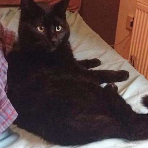 Wed, Apr 20th, 2016 Lost Male Cat - Kilmanahan, Knocklofty, South Tipperary