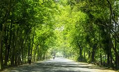 Natore-Bogra Highway, Bangladesh
