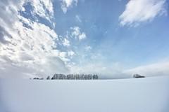 冬のマイルドセブンの丘