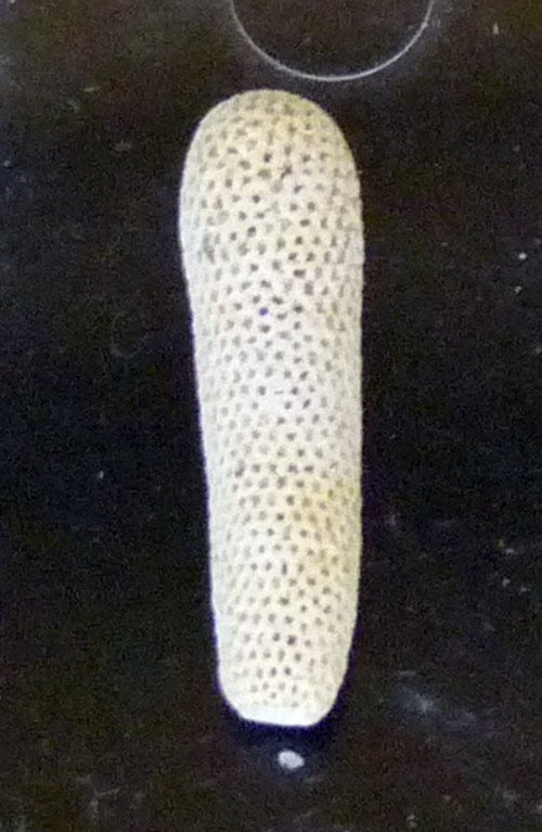 Dactylopora cylindracea 24292995492_ca1a1149b4_o