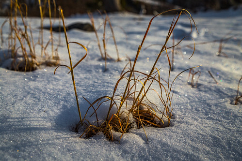 city morning winter orange snow newyork color ice nature colors weather yellow closeup sunrise frozen us frost unitedstates harriman wintergrass 2016 southfields driedgrass harrimanpark