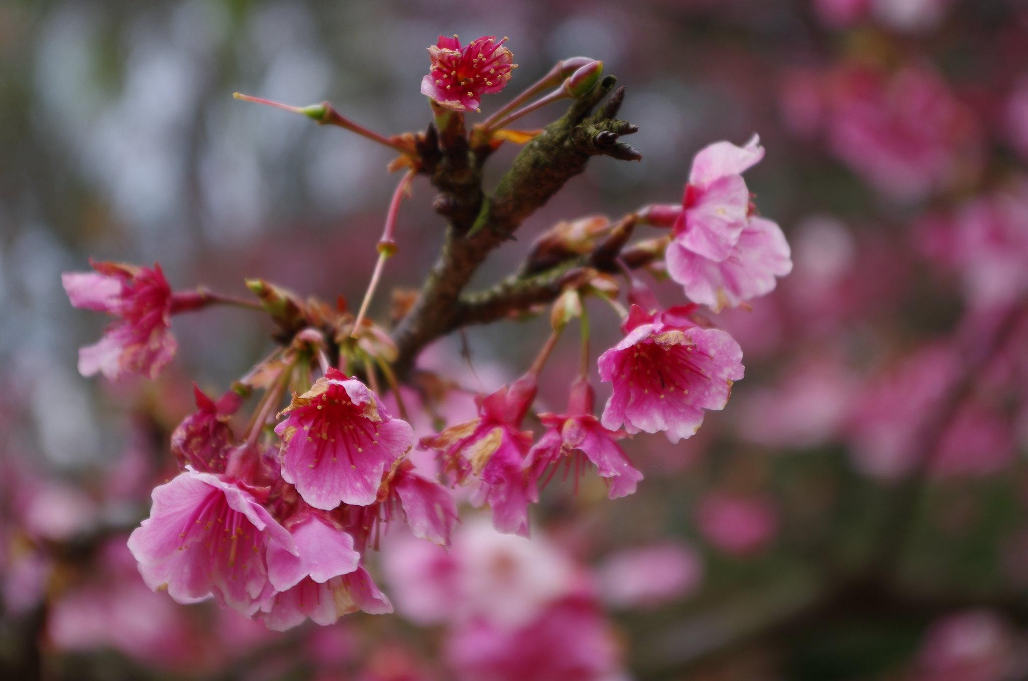 春節陽明山漫遊