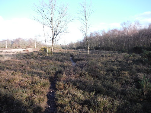 Bucklebury Common (Nature Reserve)