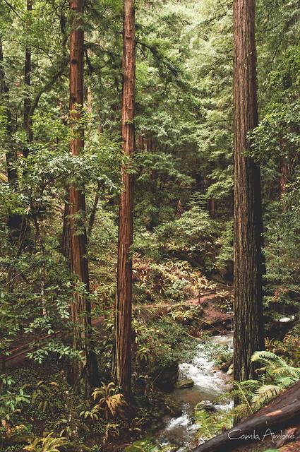 Woods #2