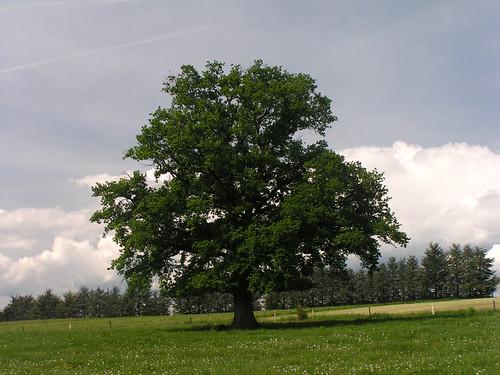 20080514 22779 0904 Jakobus Baum Wiese_K
