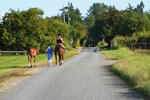 Horses on the Lochside Trail in Central Saanich, Saanich Peninsula, Victoria, Vancouver Island, British Columbia