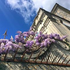 Passion #glycines  #flowerspirit #flowermania #Angoulême #Charente #LaCharente #PoitouCharentes