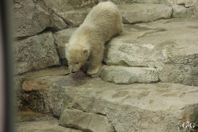 Zoo Bremerhaven 09.04.16 2.Teil23