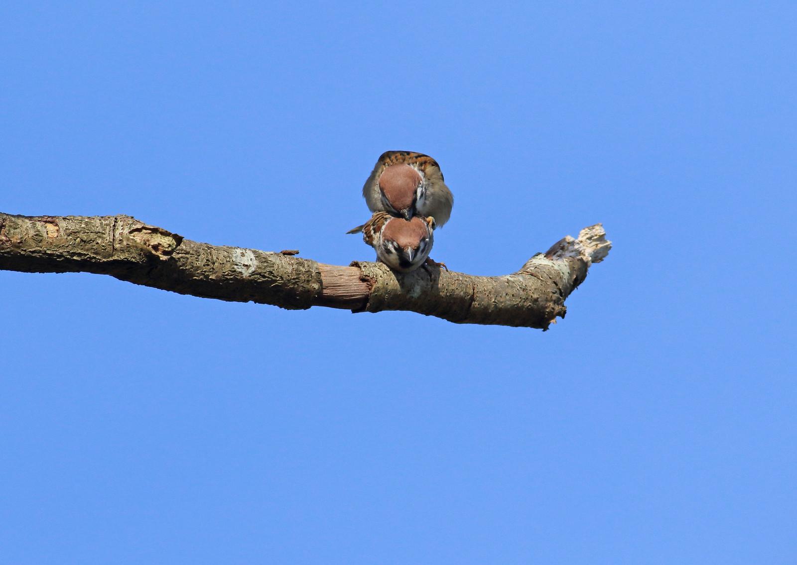 sparrowsetc0059 copy