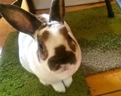 Hi! I'm Olaf!