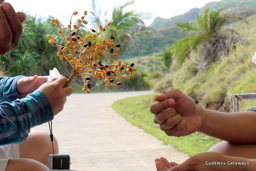 date-palm-fruit.jpg