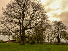 Un arbre - Seillères, Malafretaz