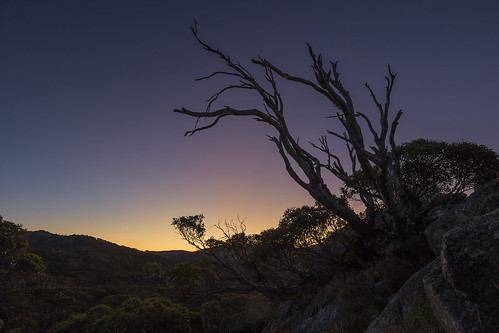 sunset snow mountains gum twilight snowy gumtree charlottepass mountkosciuszko