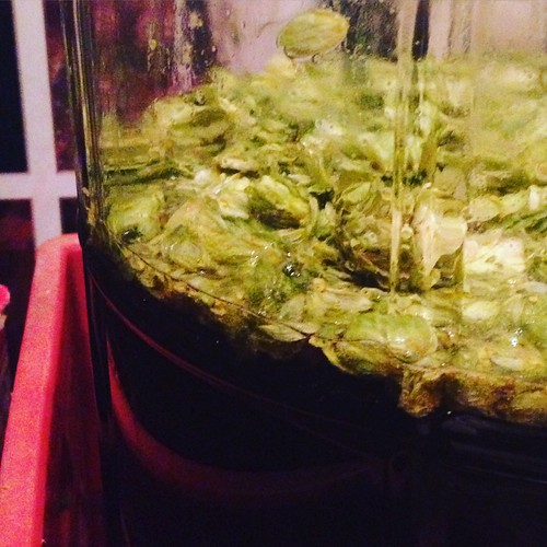 dry hops are in