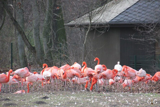1. Feiertag im Tierpark Berlin48